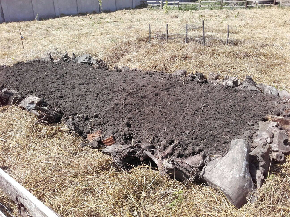 Hugel bed leveled out, edged with tree stumps and seeded