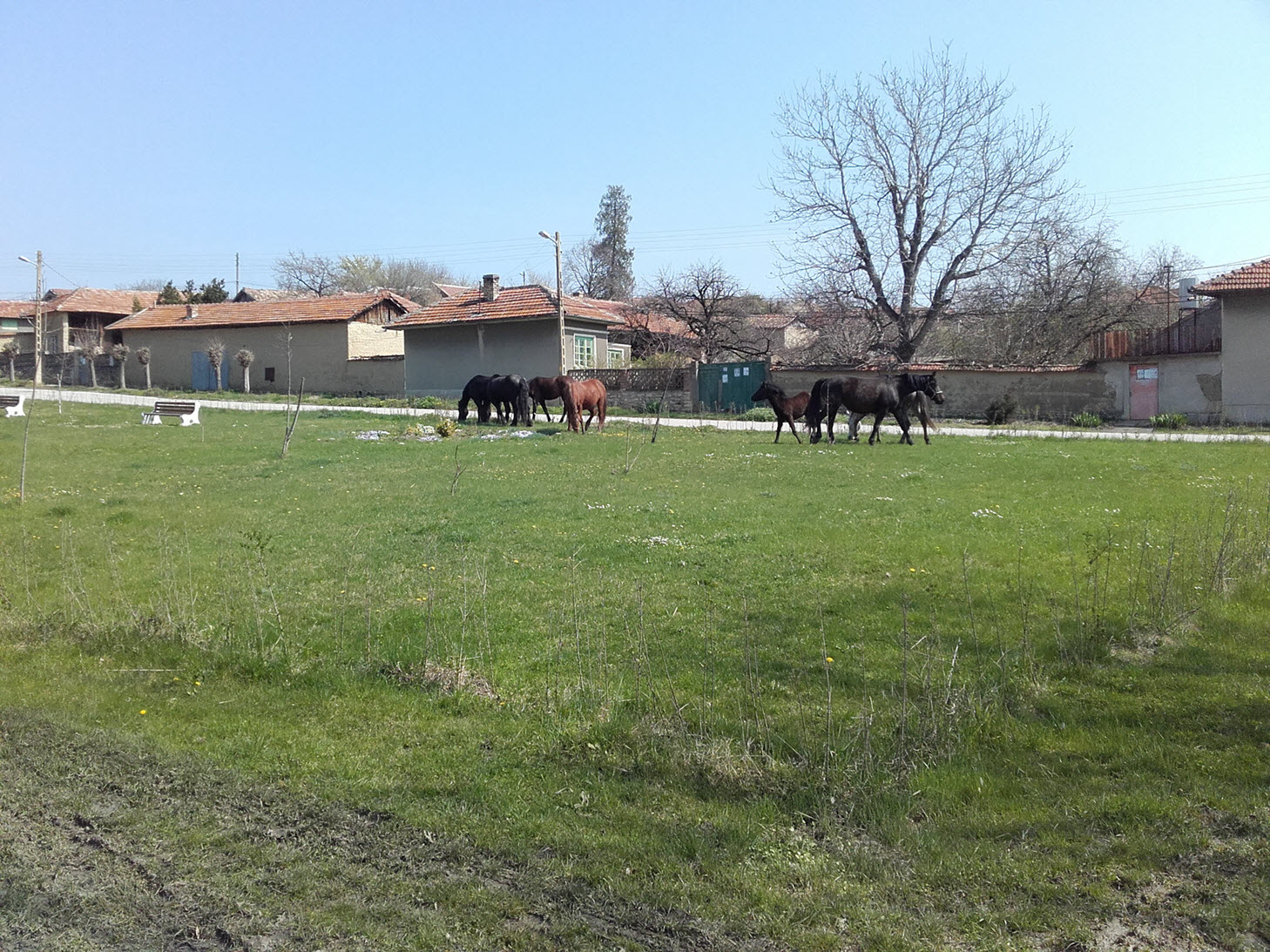 Escaped horses in Resen, Bulgaria