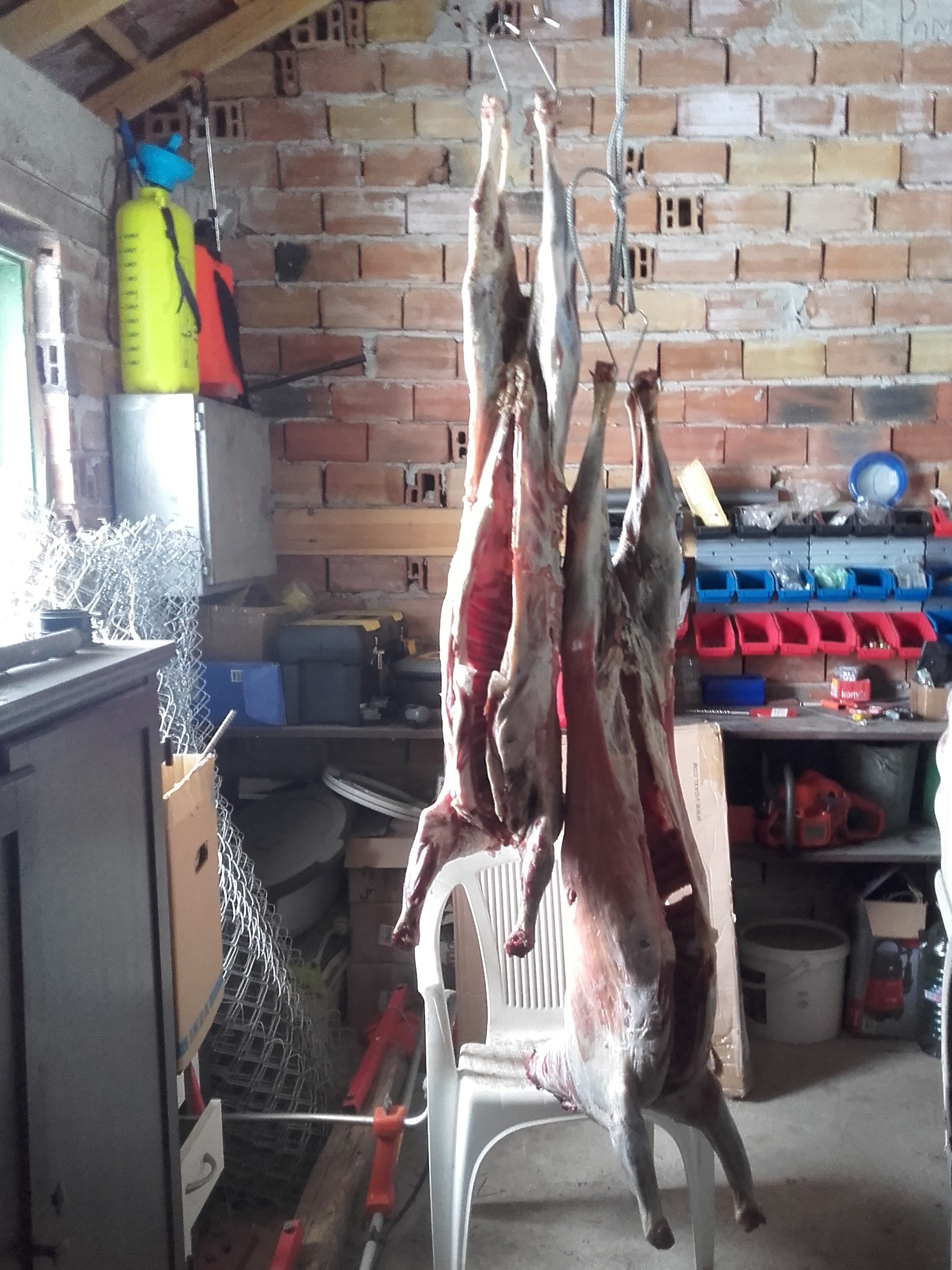 Two goat carcasses hanging in garage - two young male goats we raised over winter... never again with goats!!