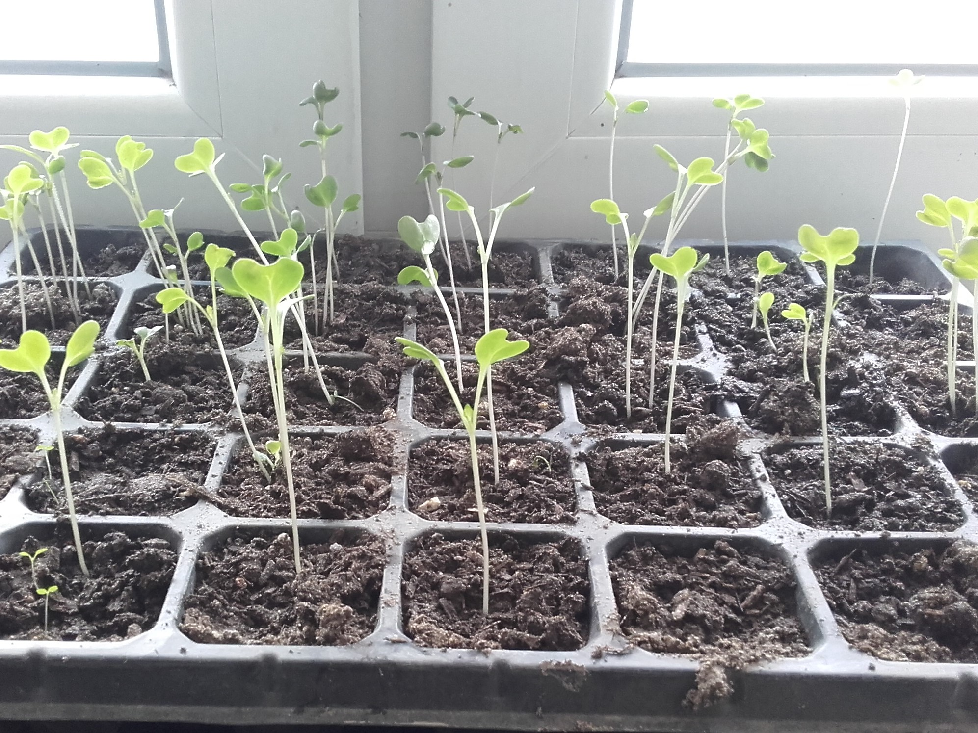 More seedlings building up their strength in the sun